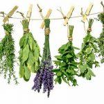 Заготовка лечебных трав осенью